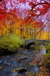 Fall Leaves Bentonville, AR